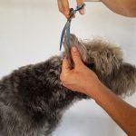 Hundesalon Fellrevier: Mischling Paul wird frisiert