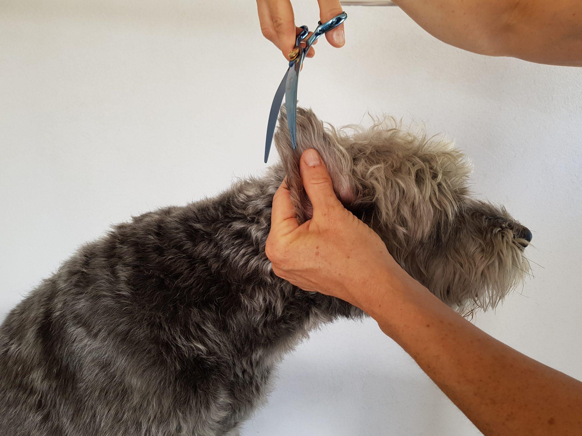 Hundesalon Fellrevier